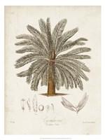 Antique Tropical Palm I Fine Art Print
