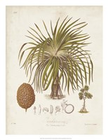 Antique Tropical Palm II Framed Print