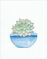 Blue Cactus Fine Art Print