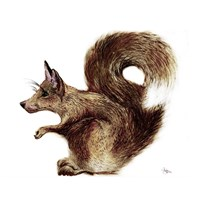 Foxysquirrel Framed Print