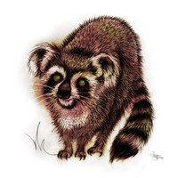 Koalacoon Fine Art Print