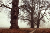 Misty Trees Fine Art Print