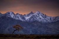 Tree and the Mountain Fine Art Print