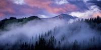 Evergreens Fog Fine Art Print