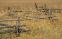 Grazing Fence Fine Art Print