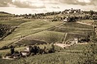 Tuscany Vineyard Fine Art Print