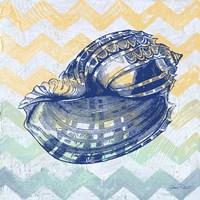 Sea Creatures -Shell II Framed Print