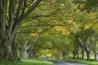 Canopy of Trees Fine Art Print