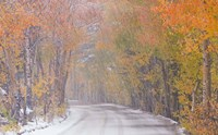 Snowy Road Fine Art Print