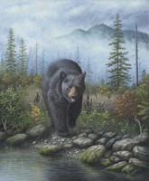 Smoky Mountain Black Bear Fine Art Print