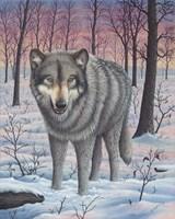 Lone Wolf Fine Art Print
