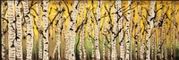 Panor Aspens Fall Begins Fine Art Print
