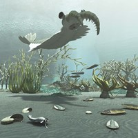 Animals And Floral Life From The Burgess Shale Formation Of The Cambrian Period Fine Art Print