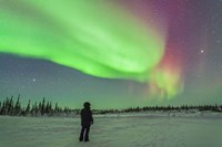 Aurora borealis with Vega and Arcturus Stars, Manitoba, Canada Fine Art Print