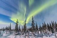 Aurora borealis over the Trees in Churchill, Manitoba, Canada Fine Art Print