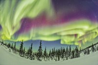Aurora borealis over Churchill, Manitoba, Canada Fine Art Print