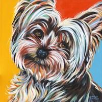 Sweet Yorkie II Fine Art Print