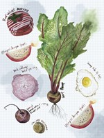 Food Sketches II Fine Art Print