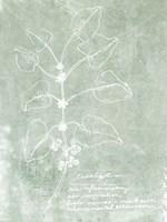Essential Botanicals I Framed Print