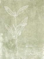 Essential Botanicals IV Framed Print
