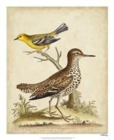 Antique Bird Menagerie I Framed Print