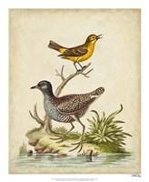 Antique Bird Menagerie II Framed Print