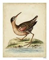 Antique Bird Menagerie IV Framed Print
