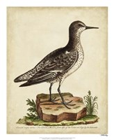 Antique Bird Menagerie V Framed Print