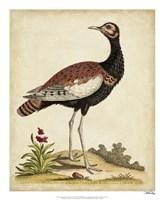 Antique Bird Menagerie IX Framed Print