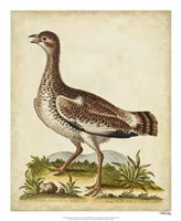 Antique Bird Menagerie X Framed Print