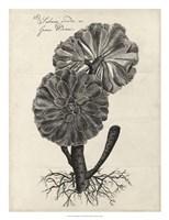 Thornton Succulents II Framed Print