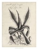 Thornton Succulents III Fine Art Print