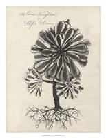 Thornton Succulents IV Framed Print