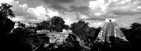 Ruins Of An Old Temple, Tikal, Guatemala BW Fine Art Print