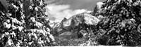 Snowy trees in winter, Yosemite Valley, Yosemite National Park, California Fine Art Print
