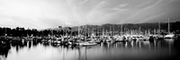 Boats moored in harbor at sunset, Santa Barbara Harbor, California Fine Art Print