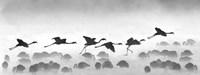 Flamingos landing, Kenya BW Fine Art Print