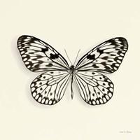 Butterfly V Fine Art Print