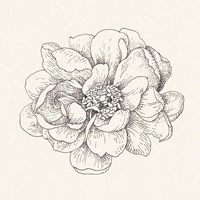 Pen and Ink Florals IV Fine Art Print