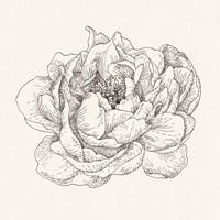 Pen and Ink Florals V Fine Art Print
