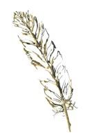 Gilded Turkey Feather II Framed Print