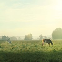 Farm Morning I Square Framed Print