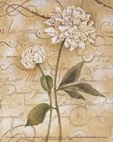 Calligraphy Peony Fine Art Print