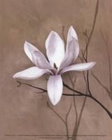 Delicate Beauty II Fine Art Print