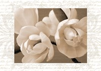 Winter Magnolia II Fine Art Print