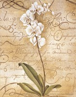 Calligraphy Orchid Fine Art Print