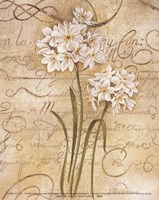 Calligraphy Narcissus Fine Art Print