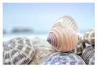Crescent Beach Shells 15 Fine Art Print