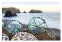 Crescent Beach Shells 16 Fine Art Print