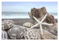 Crescent Beach Shells 5 Fine Art Print